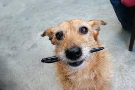 собака грызёт ручку