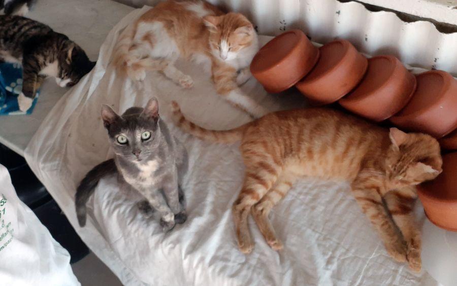 Paphos animal shelter