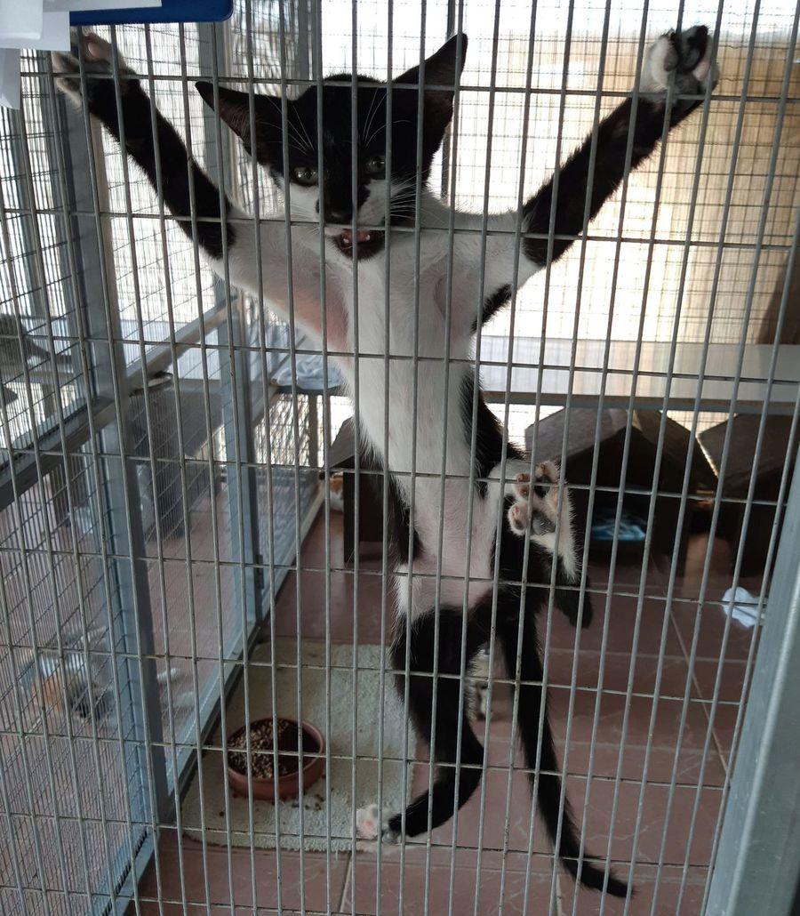 Приют для животных в Пафосе