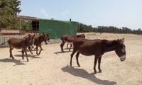 Волонтёрю в приюте для животных в Пафосе